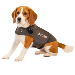 Dog in thundershirt